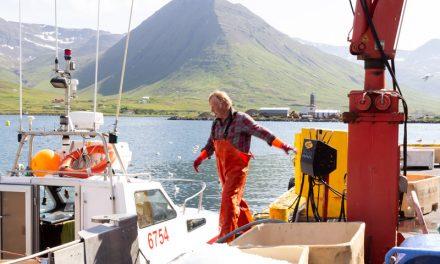 Landaður afli í Fjallabyggð
