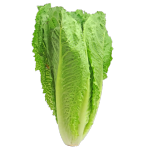 Varað við neyslu á romaine salati