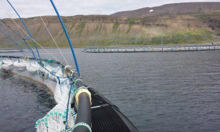 Kröfu um ógildingu leyfis til sjókvíaeldis í Dýrafirði hafnað