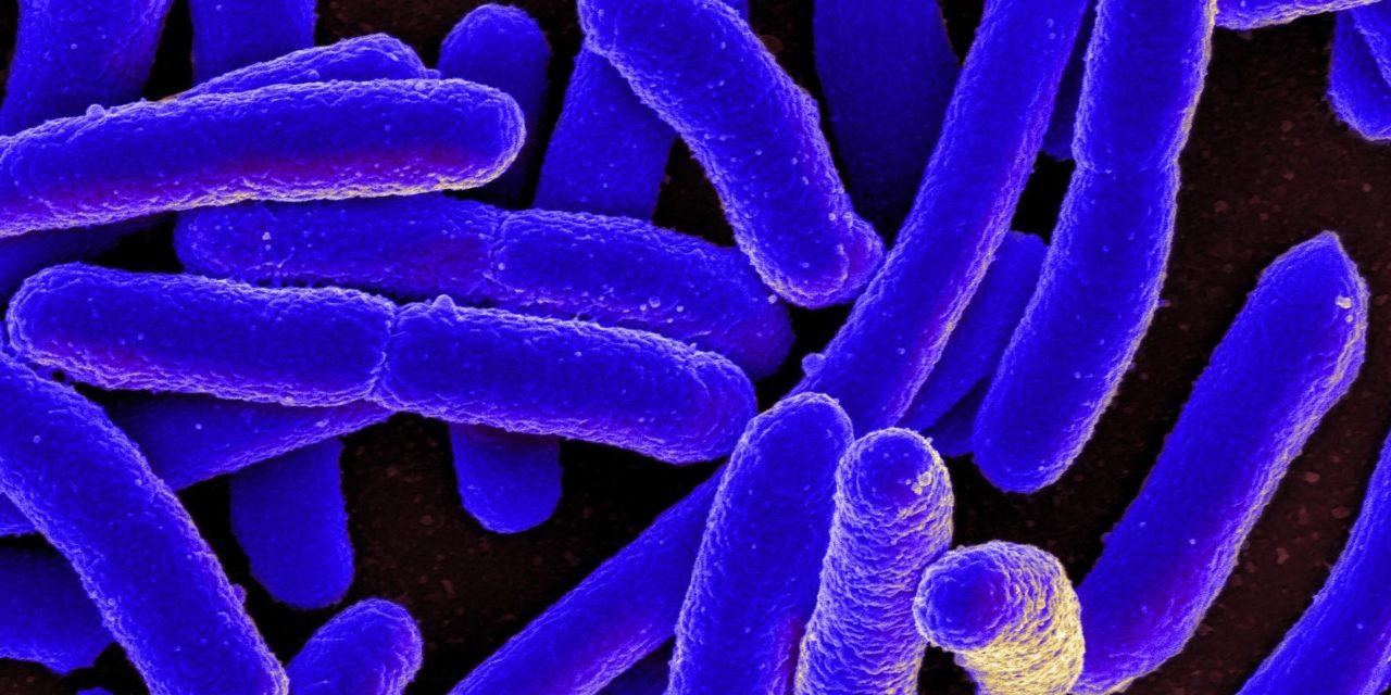 Alvarlegar sýkingar hjá börnum af völdum E. coli baktería