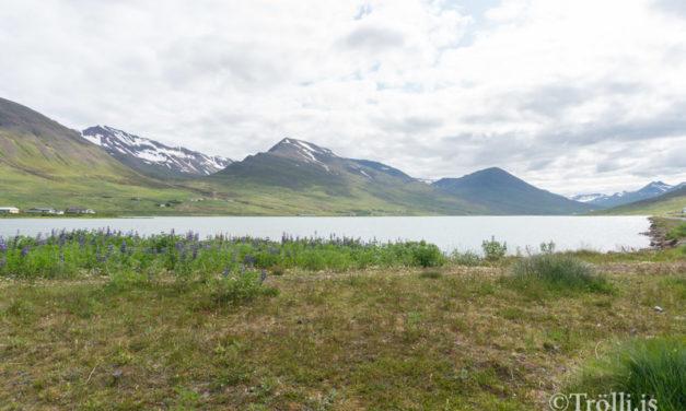 Göngustígur við Ólafsfjarðarvatn