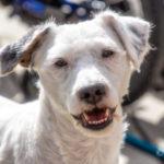 Hundar og gosstöðvar