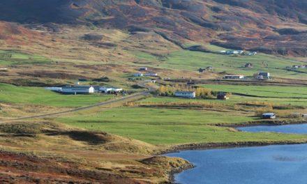 Þarf ekki að skera niður bústofninn á Brúnastöðum