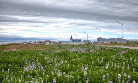 Bændamarkaður á Hofsósi í dag