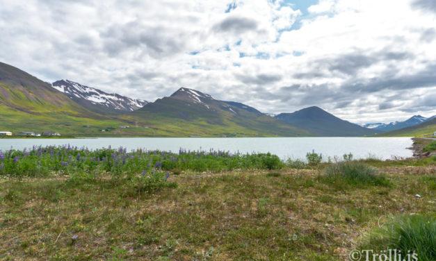 Veiðifélag Ólafsfjarðar greiðir út 6 millj. í arð