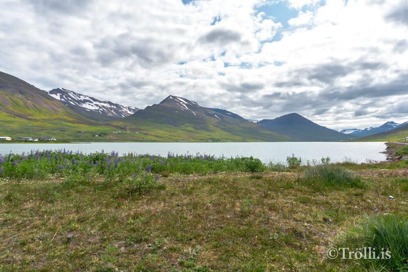 Banna netaveiði í Ólafsfjarðarvatni