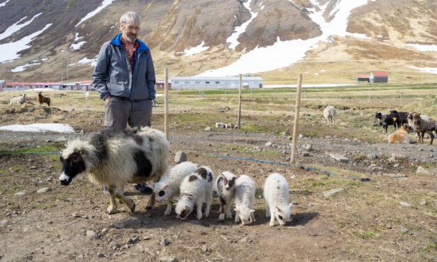 Fimmlemba á Siglufirði