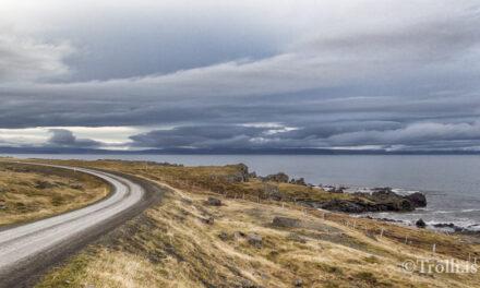 Forstöðumaður safna í Húnaþingi vestra – afleysing