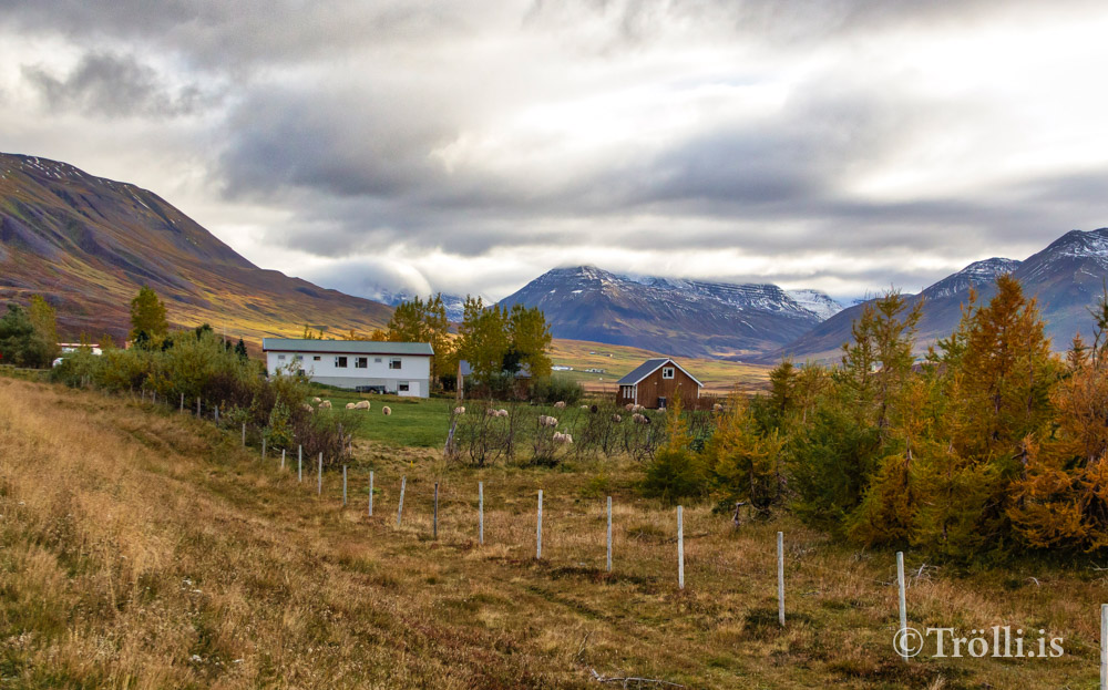 """Brúnastaðir meðal fyrirtækja í """"Hugsum hærra"""""""