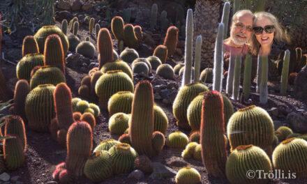 Deit dagur í kaktusagarðinum
