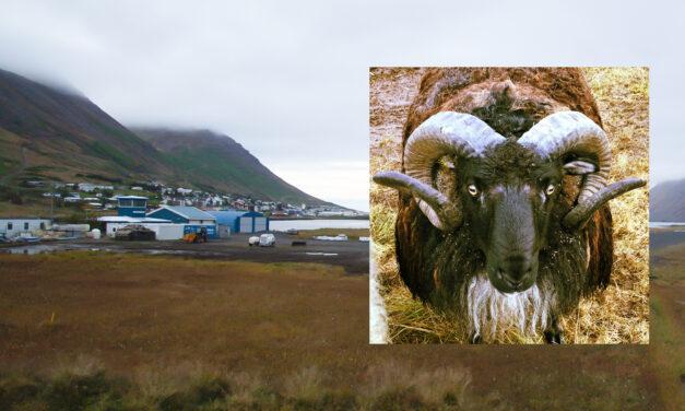 Fjallabyggð tapaði máli fyrir Héraðsdómi