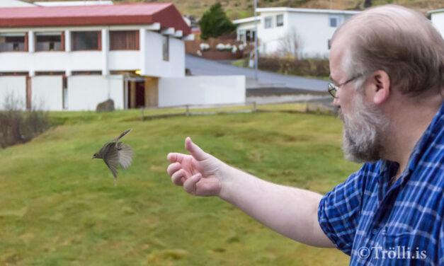 Réttast væri að taka þig og gelda