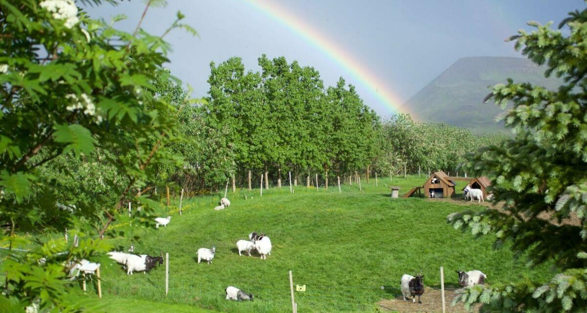 Húsdýragarðurinn á Brúnastöðum opinn alla daga