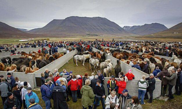 Takmörkun á aðgengi að Laufskálarétt
